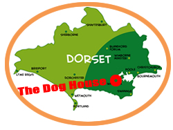 Dog grooming service in Dorset